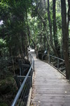 Boardwalk through the Jamison Valley rainforest