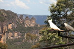 Blue Mountains - November 2011