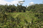 Bali - Island Tour - April 2012